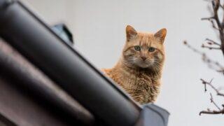 屋根にいる猫
